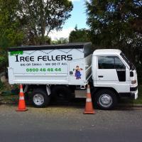 TREE FELLERS