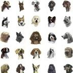 All Breeds Charms