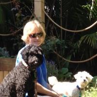 Freddie and Friends Dog Grooming