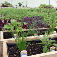 Weathersfield Certified Organics Waikato