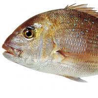 Oceanz Seafood Markets Henderson