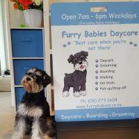 Furry Babies Daycare Ltd