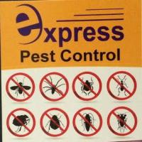 Xpress Pest Management Nelson