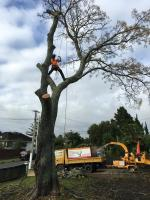 Next 2 Nature Tree Services