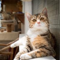 Keepin Katz Boarding Cattery