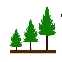 TAML FORESTRY