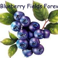 Blueberry Fields Forever PYO
