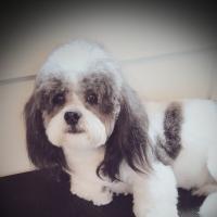 Nature's pawprint's dog grooming