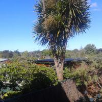 Waitakere Window Cleaning Service