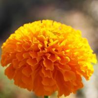 Sunshine and Marigolds Gardening Services