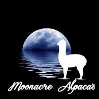 Moonacre Alpaca's