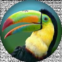 Toucan Media Ltd