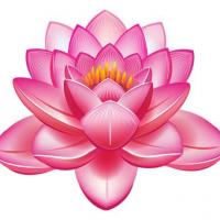 Lotus Touch NZ