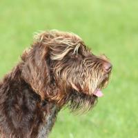 Bella's Buddies - Puppy Training & Pet Services