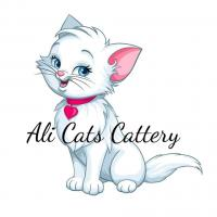 Ali Cats Cattery