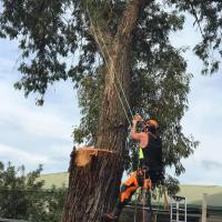CJS Tree Contracting Ltd