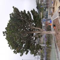 Treecology Tree Services