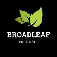Broadleaf tree Care