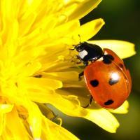 Ladybirds Lawn Care