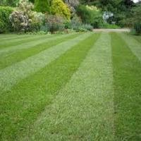 Northern Lawn Care