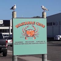 Waikanae Crab