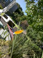 Silver Fern Garden Maintenance