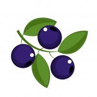 Westlea Blueberries
