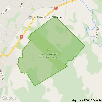 Nikau Valley