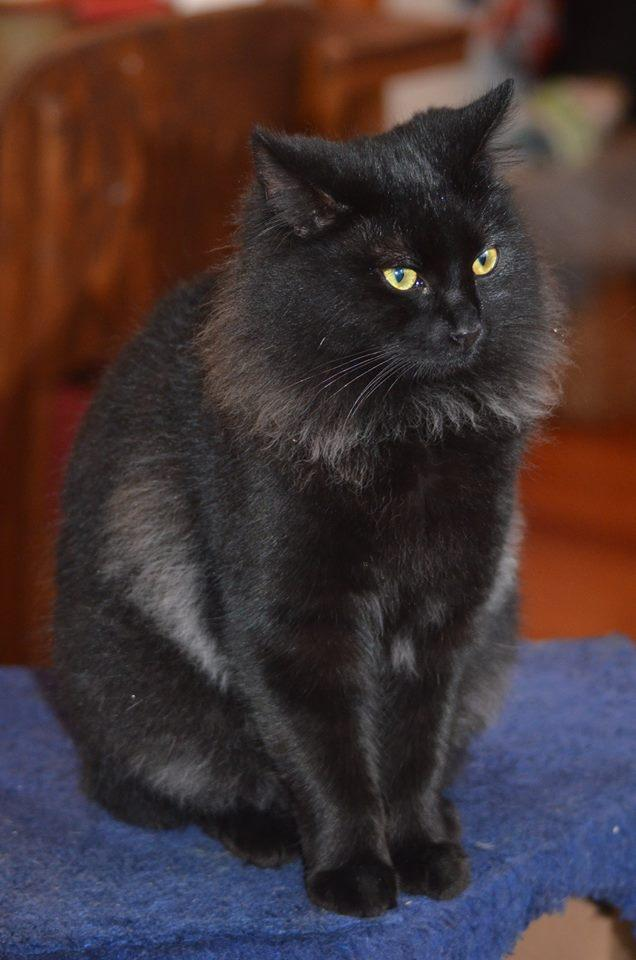 Kittens For Adoption Neighbourly Takaro Palmerston North